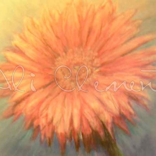 Gerbera - Ali's Art Designs